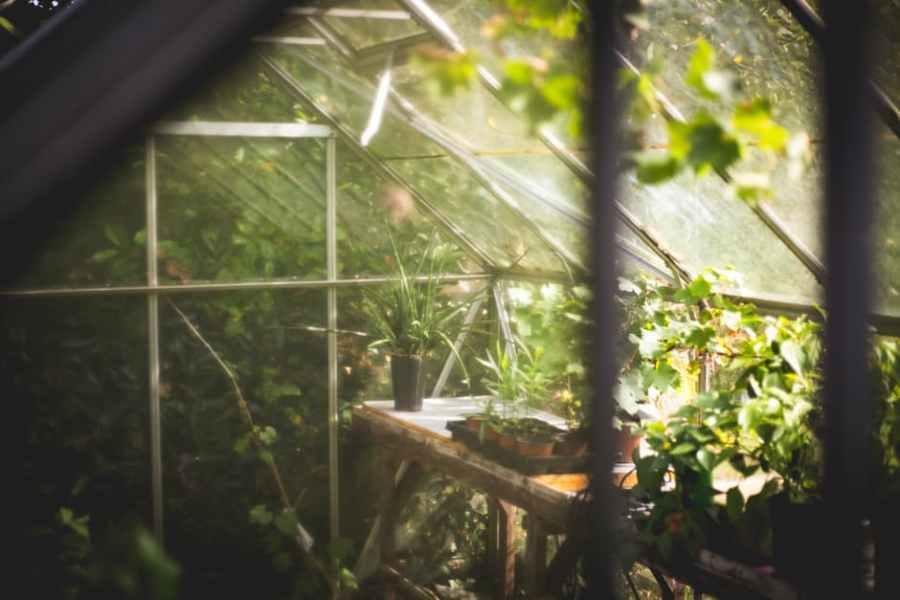 Szklarnie ogrodowe – uprawa ipielęgnacja
