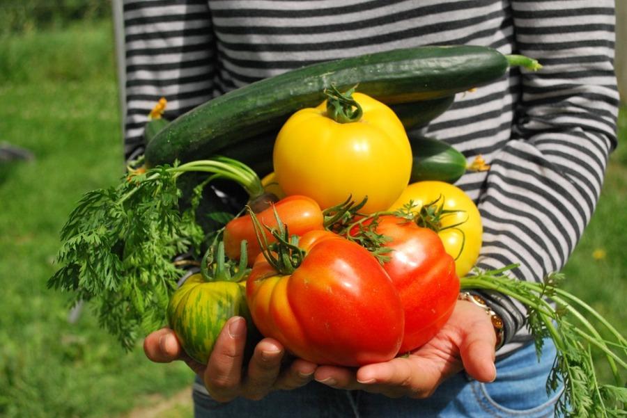 Uprawa warzyw w tunelufoliowym